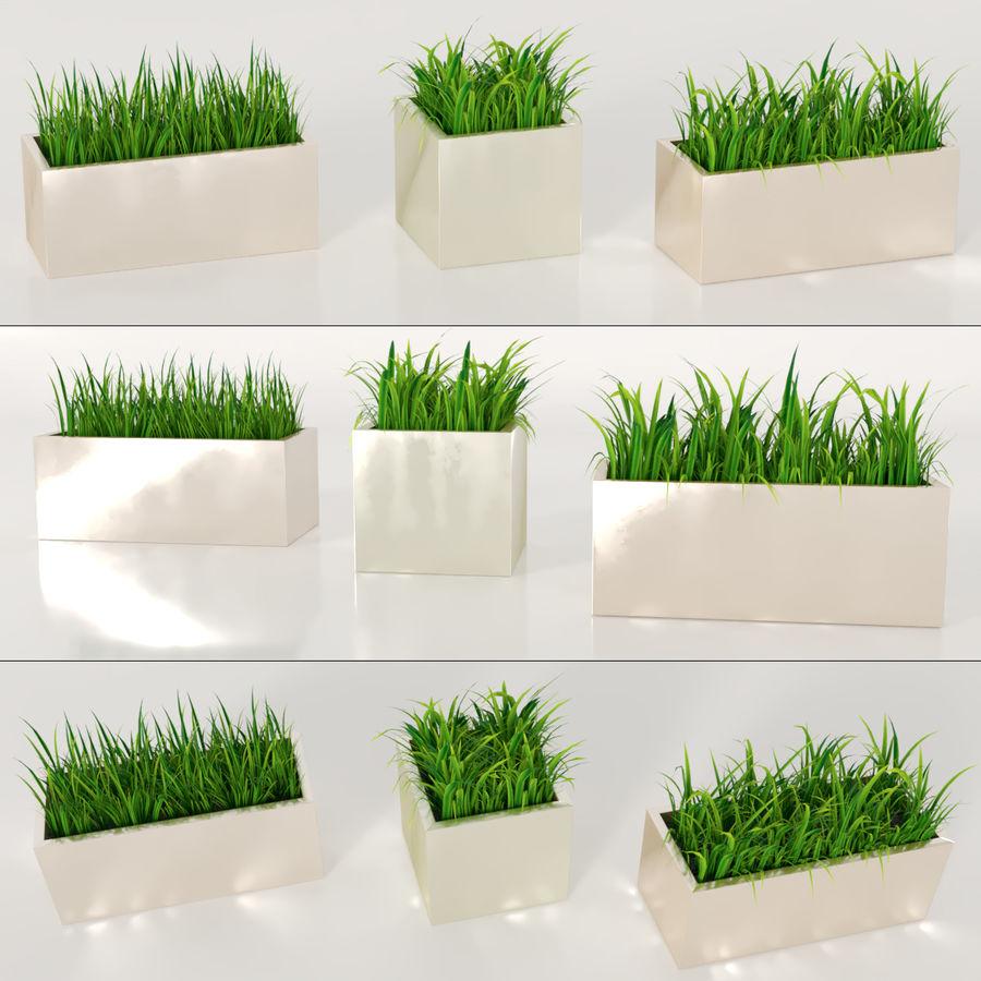 실내 식물 : 화분에 심은 잔디 royalty-free 3d model - Preview no. 1