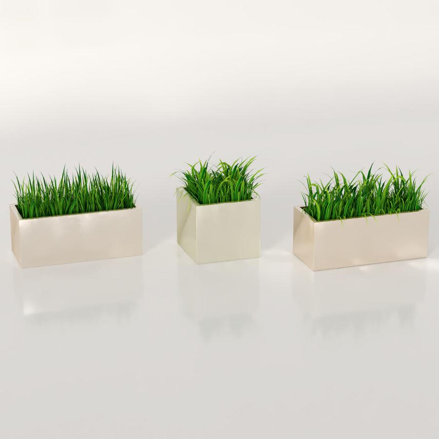실내 식물 : 화분에 심은 잔디 royalty-free 3d model - Preview no. 2