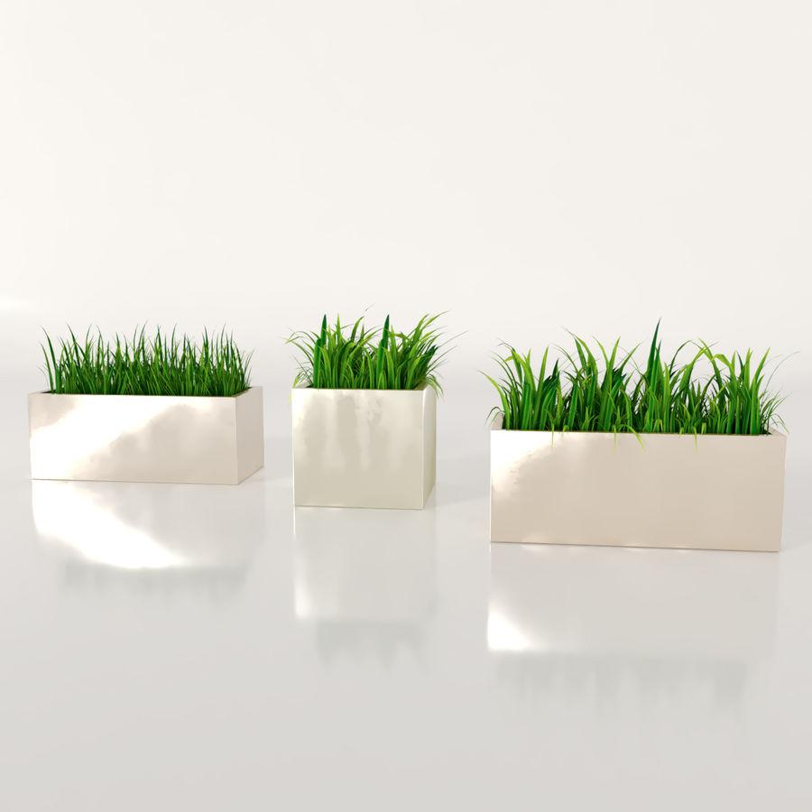실내 식물 : 화분에 심은 잔디 royalty-free 3d model - Preview no. 3