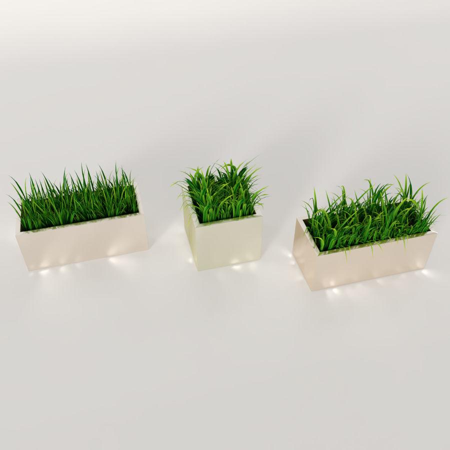 실내 식물 : 화분에 심은 잔디 royalty-free 3d model - Preview no. 4