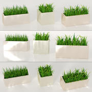 Indoor Plants: Potted Grass 3d model