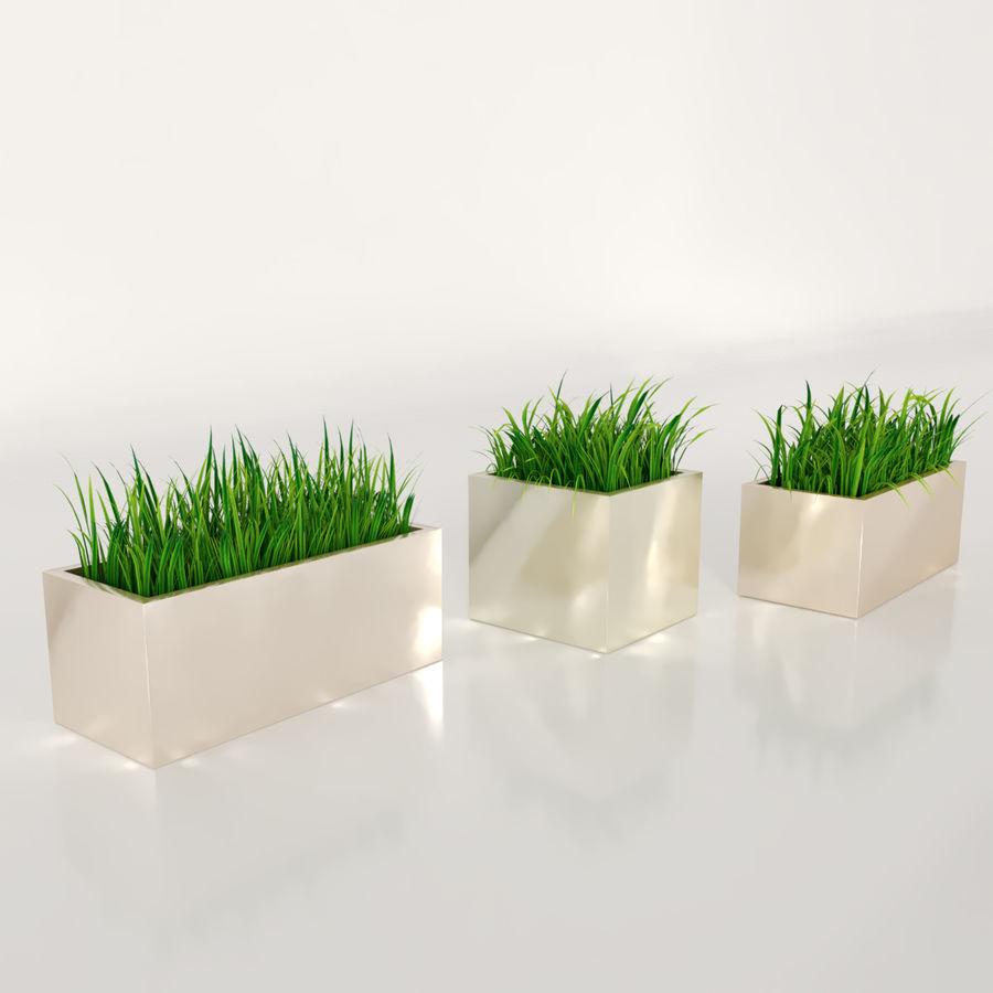 실내 식물 : 화분에 심은 잔디 royalty-free 3d model - Preview no. 5