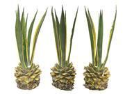 Tropical Plants Scan 8K (2) 3d model