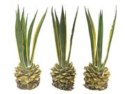 Balayage des plantes tropicales 8K (2) 3d model