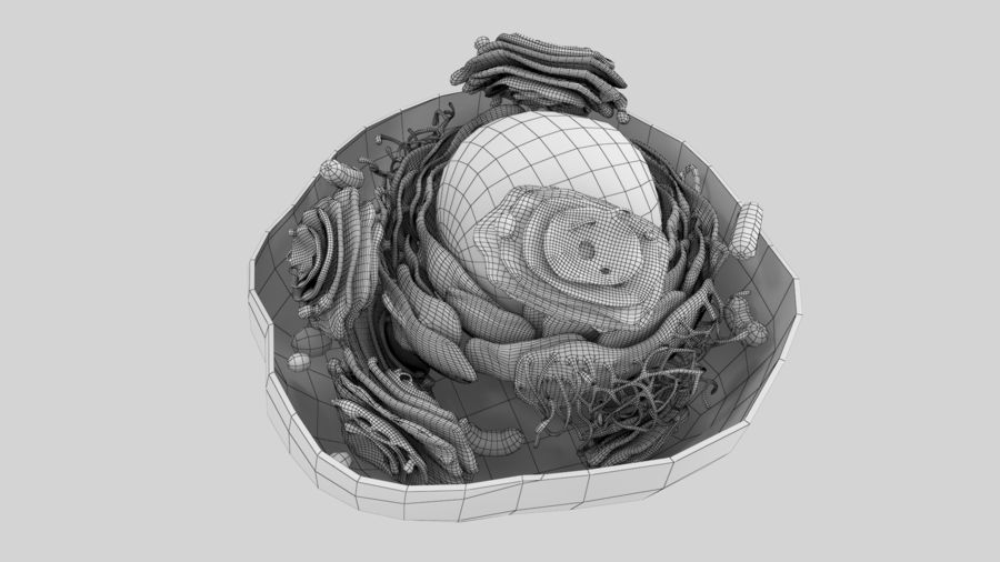 Animal Cell royalty-free 3d model - Preview no. 6