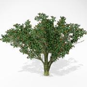 Hawthorn 3d model