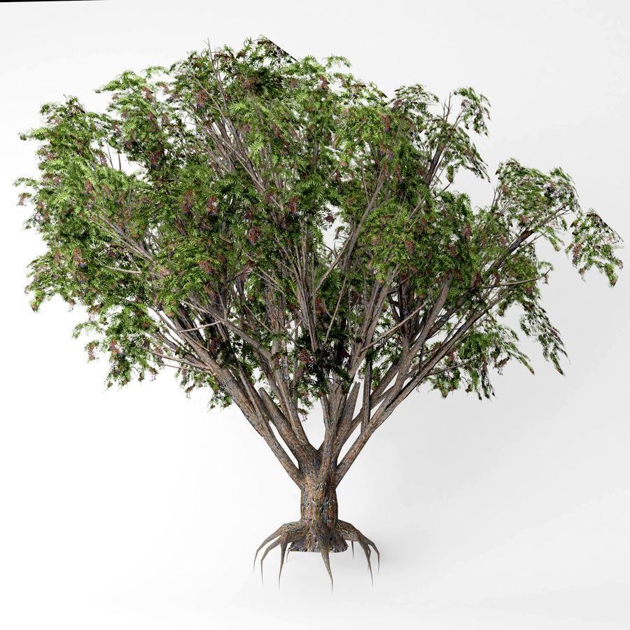 Arbusto de ancião preto royalty-free 3d model - Preview no. 4