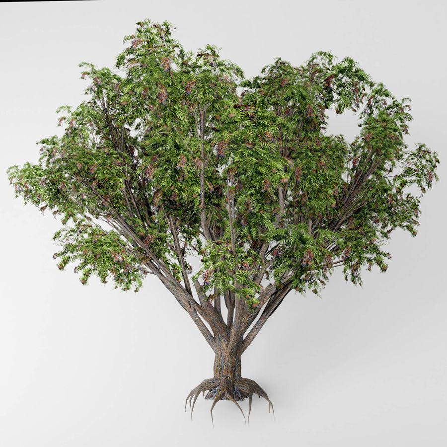 Arbusto de ancião preto royalty-free 3d model - Preview no. 1