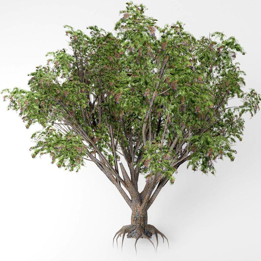 Arbusto de ancião preto royalty-free 3d model - Preview no. 2