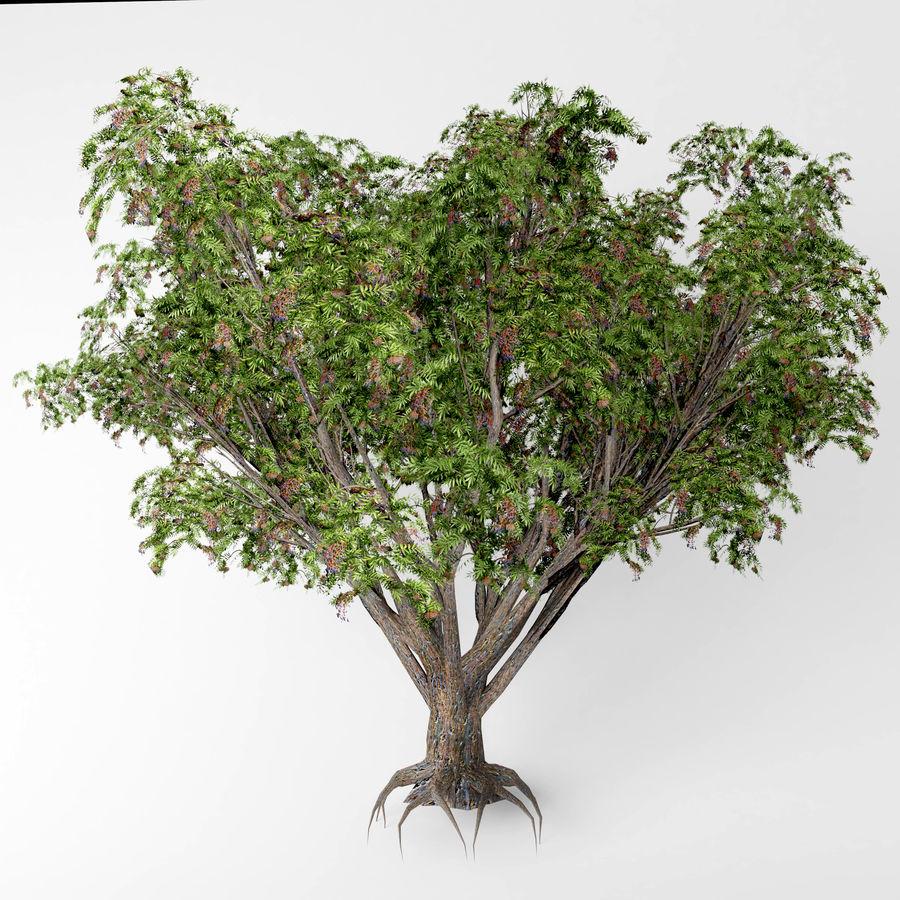 Arbusto de ancião preto royalty-free 3d model - Preview no. 3