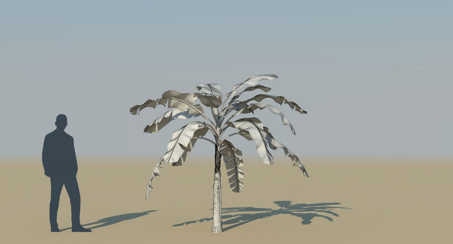 Banana Plants royalty-free 3d model - Preview no. 31