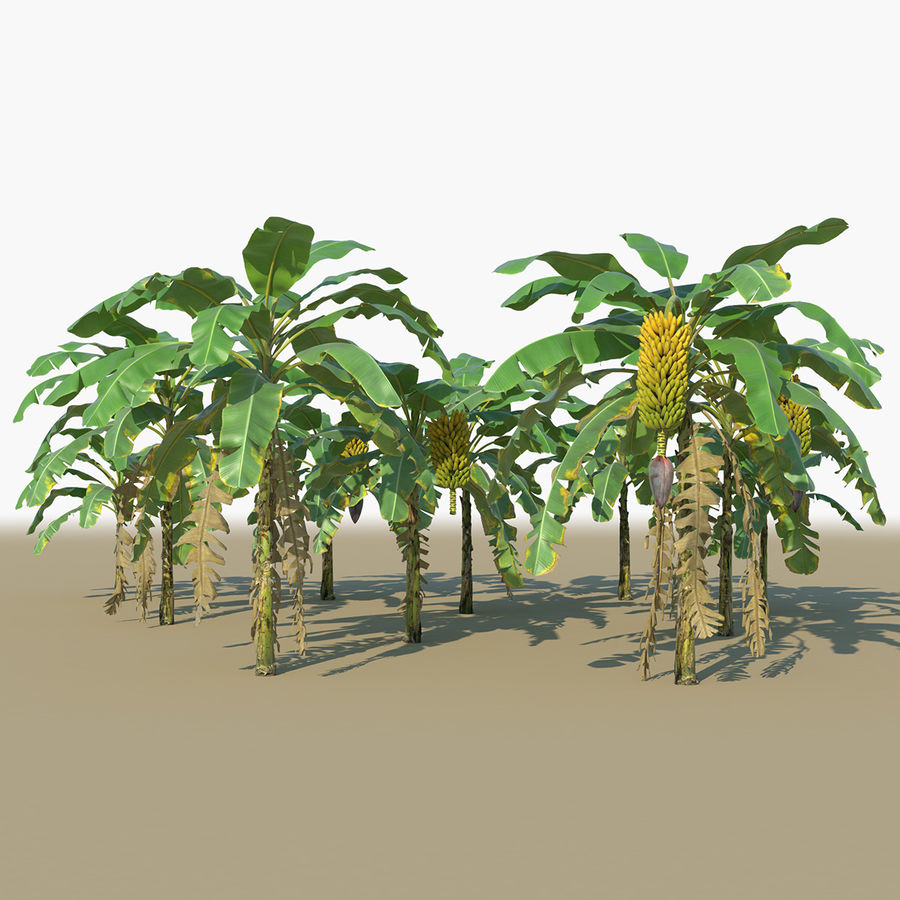 Banana Plants royalty-free 3d model - Preview no. 1