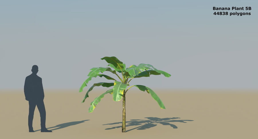 Banana Plants royalty-free 3d model - Preview no. 13