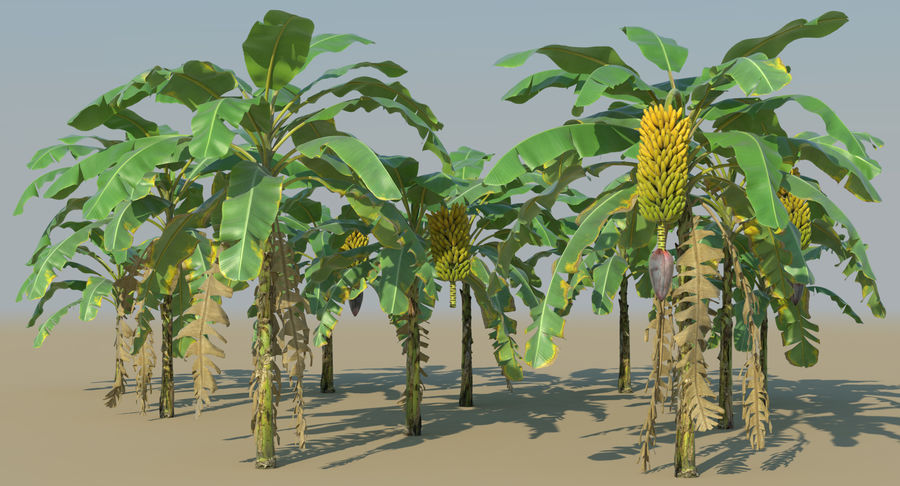 Banana Plants royalty-free 3d model - Preview no. 3