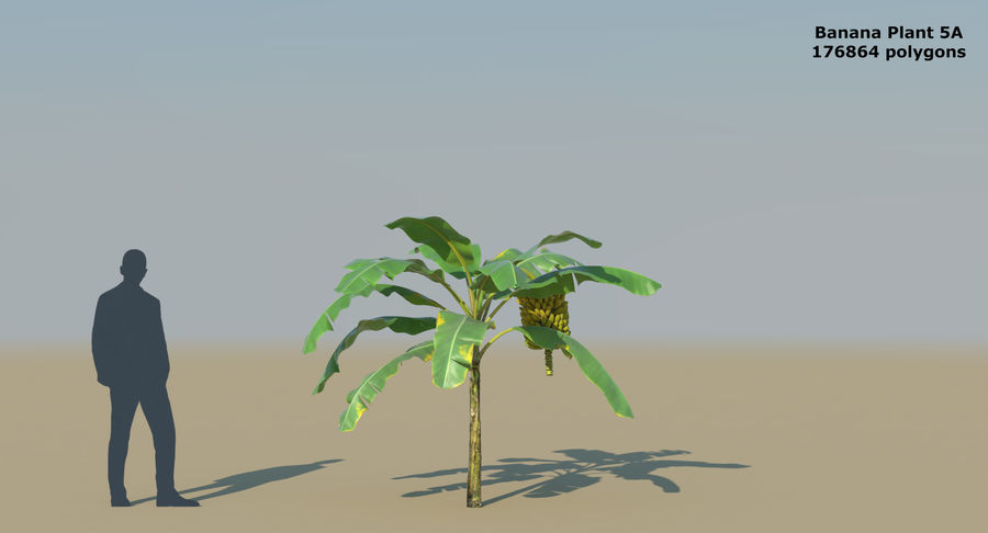 Banana Plants royalty-free 3d model - Preview no. 12