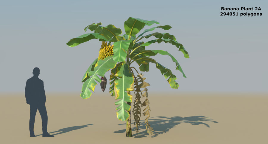 Banana Plants royalty-free 3d model - Preview no. 6