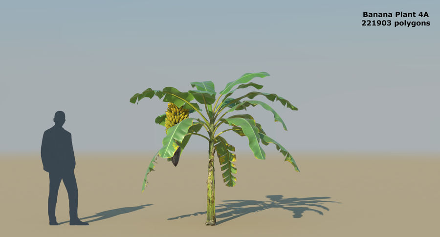 Banana Plants royalty-free 3d model - Preview no. 10