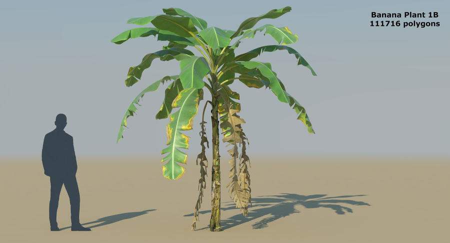 Banana Plants royalty-free 3d model - Preview no. 5