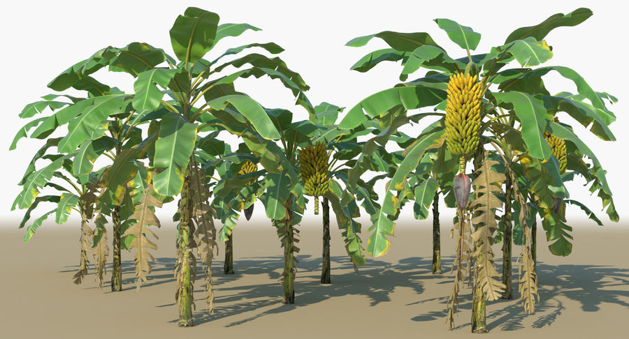 Banana Plants royalty-free 3d model - Preview no. 2