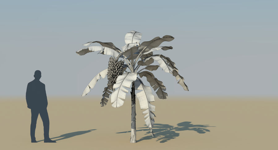 Banana Plants royalty-free 3d model - Preview no. 28