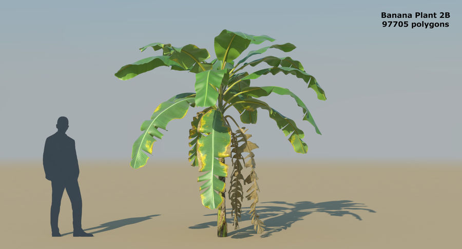 Banana Plants royalty-free 3d model - Preview no. 7