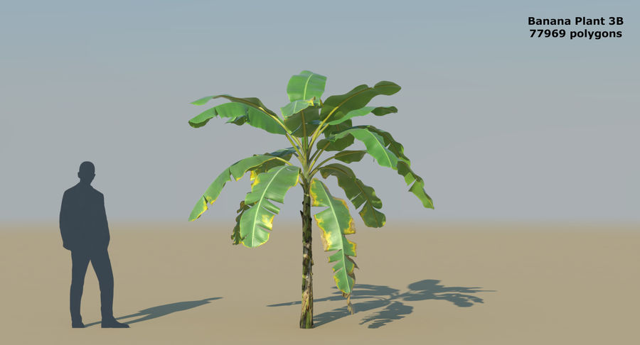 Banana Plants royalty-free 3d model - Preview no. 9