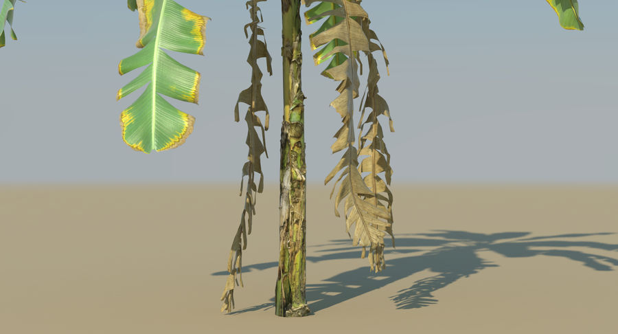 Banana Plants royalty-free 3d model - Preview no. 15