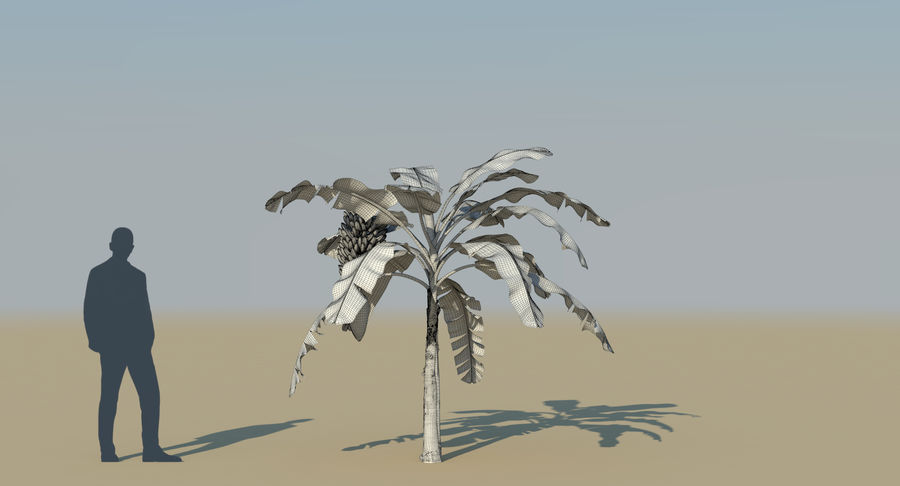 Banana Plants royalty-free 3d model - Preview no. 30