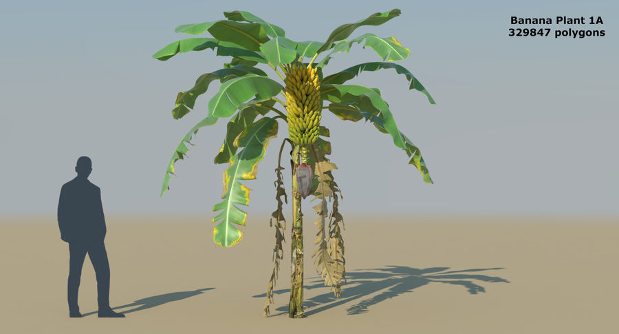 Banana Plants royalty-free 3d model - Preview no. 4
