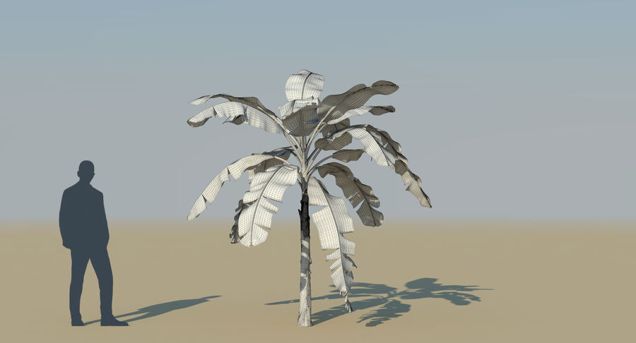 Banana Plants royalty-free 3d model - Preview no. 29