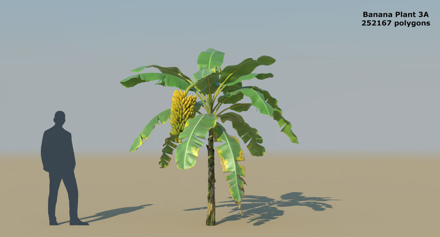 Banana Plants royalty-free 3d model - Preview no. 8