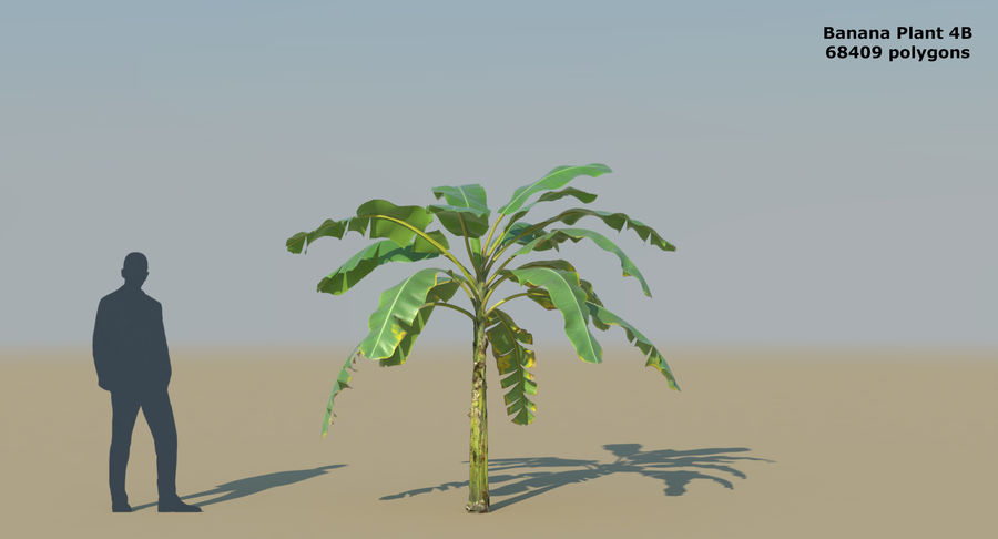 Banana Plants royalty-free 3d model - Preview no. 11