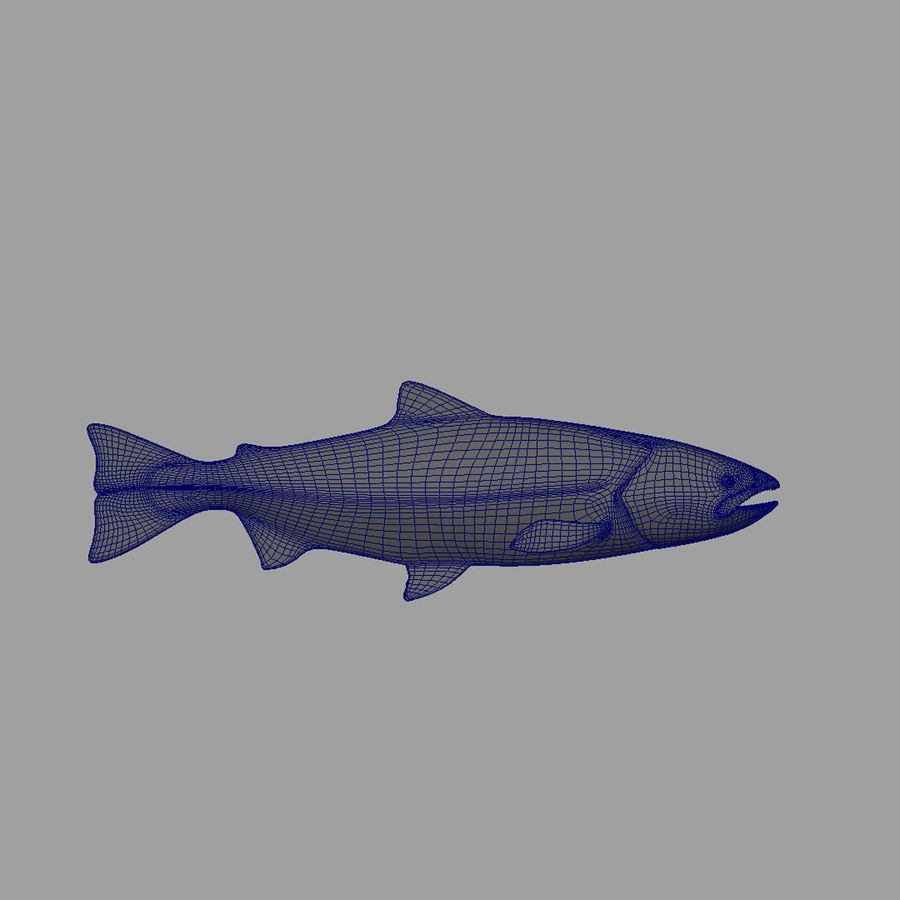 Lachs royalty-free 3d model - Preview no. 5