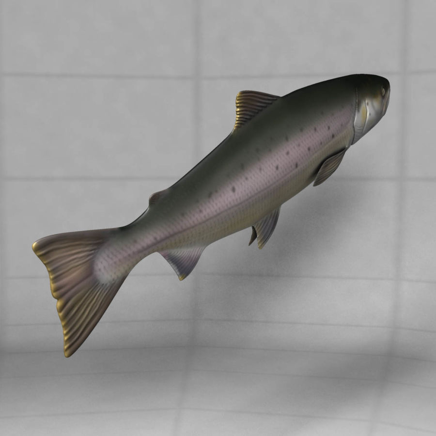 Lachs royalty-free 3d model - Preview no. 13