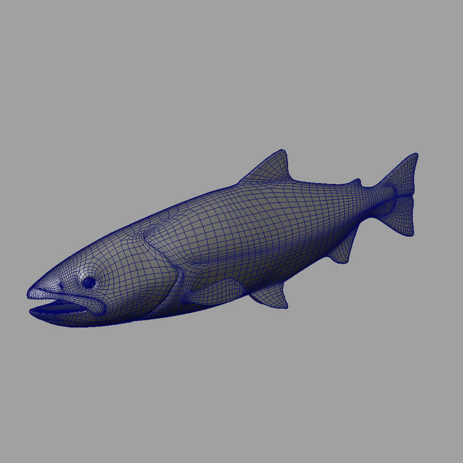 Lachs royalty-free 3d model - Preview no. 9