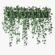 Ivy in pot 10 3d model