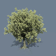 Maple Tree 03 Fall 3d model