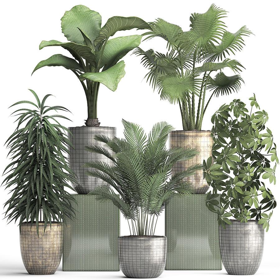 Kolekcja Rośliny egzotyczne 354 royalty-free 3d model - Preview no. 9