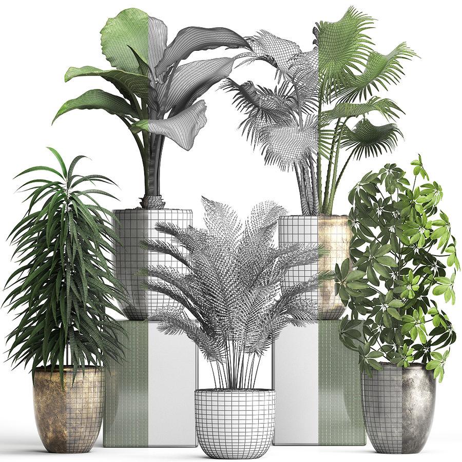 Kolekcja Rośliny egzotyczne 354 royalty-free 3d model - Preview no. 8