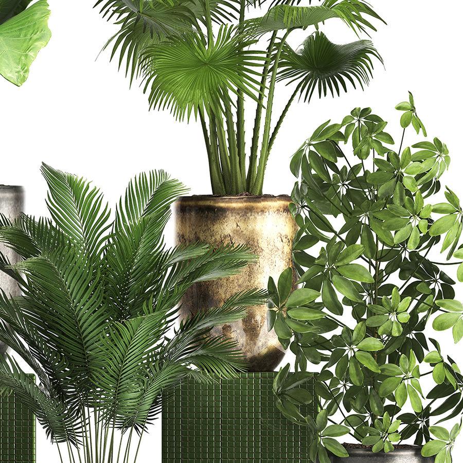 Kolekcja Rośliny egzotyczne 354 royalty-free 3d model - Preview no. 5