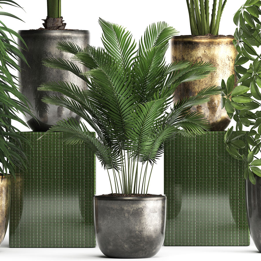 Kolekcja Rośliny egzotyczne 354 royalty-free 3d model - Preview no. 2