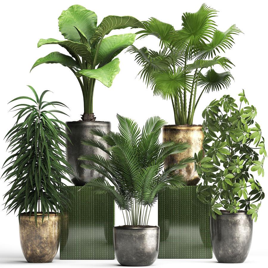 Kolekcja Rośliny egzotyczne 354 royalty-free 3d model - Preview no. 1