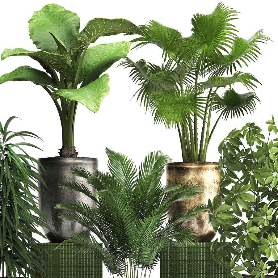 Kolekcja Rośliny egzotyczne 354 royalty-free 3d model - Preview no. 3
