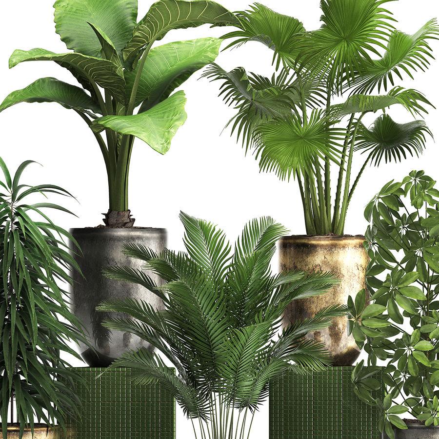Kolekcja Rośliny egzotyczne 354 royalty-free 3d model - Preview no. 4