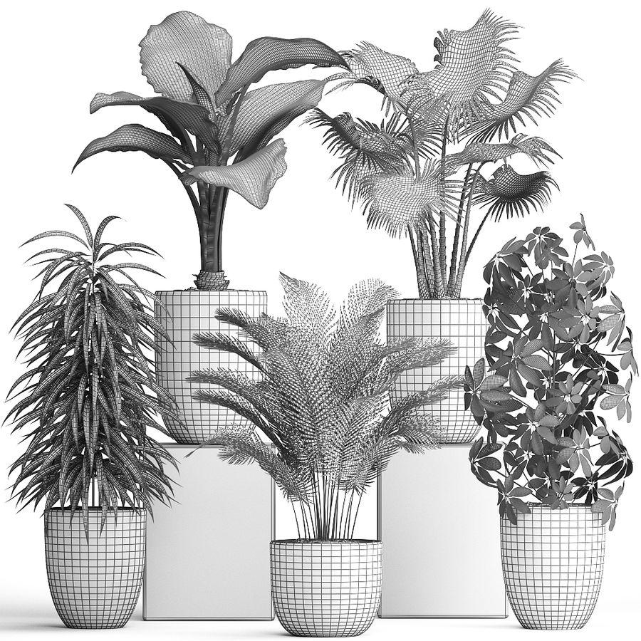 Kolekcja Rośliny egzotyczne 354 royalty-free 3d model - Preview no. 10