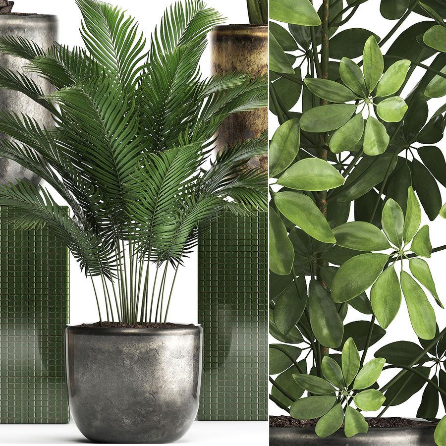 Kolekcja Rośliny egzotyczne 354 royalty-free 3d model - Preview no. 11