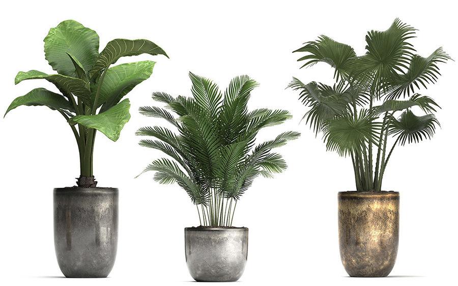Kolekcja Rośliny egzotyczne 354 royalty-free 3d model - Preview no. 7