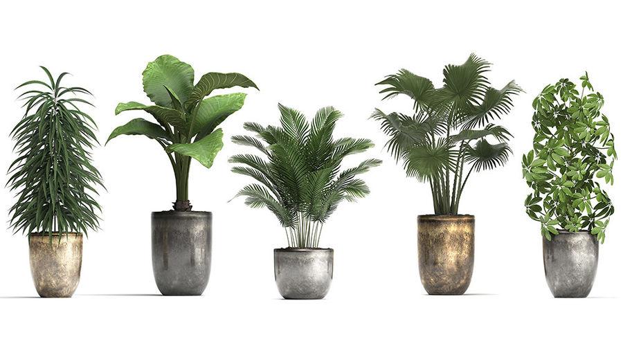 Kolekcja Rośliny egzotyczne 354 royalty-free 3d model - Preview no. 6