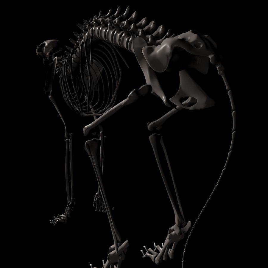 Animal Bone royalty-free 3d model - Preview no. 4
