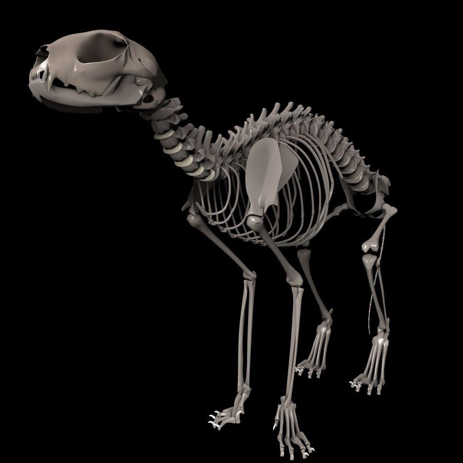 Animal Bone royalty-free 3d model - Preview no. 1